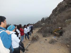 En Coquimbo inician caminatas de educación ambiental sobre flora del borde costero